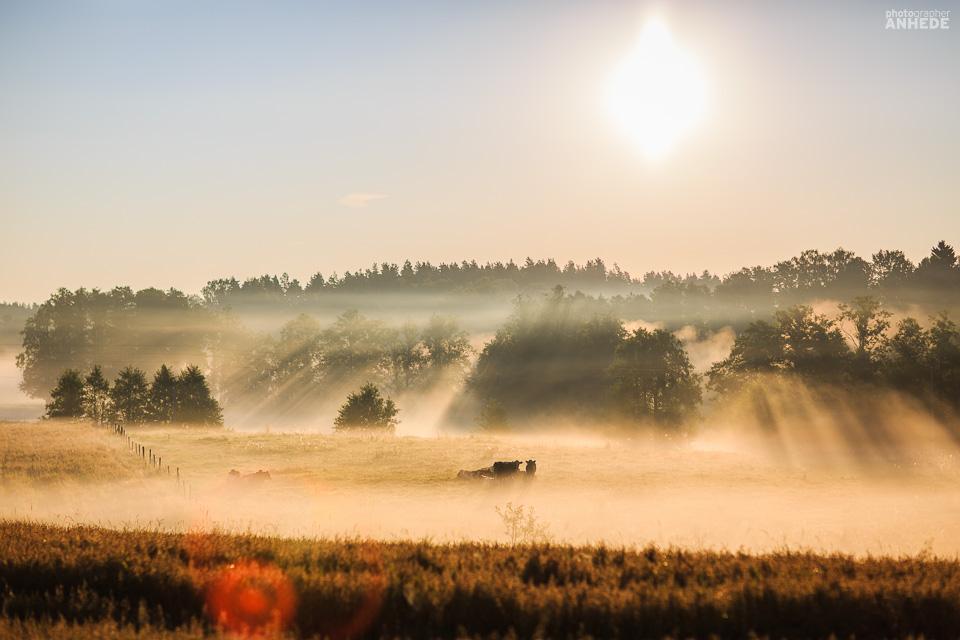 bonde, emil olsson, hove, slätte gård, swift 870, töreboda, väderstad, väderstad-verken (21)