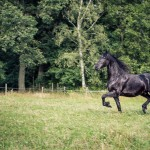 hästfotograf, Arragon (2)
