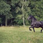 hästfotograf, Arragon (3)
