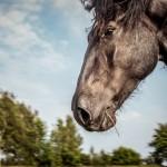 hästfotograf, Arragon (4)