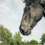 hästfotograf, Arragon (5)