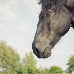 hästfotograf, Arragon (6)