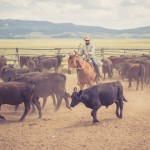 resefotograf, montana, usa, cowboys, ridning, hästar, horses, work ranch, j bar l (27)