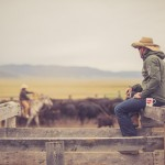 resefotograf, montana, usa, cowboys, ridning, hästar, horses, work ranch, j bar l (94)