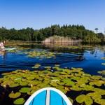stand up paddleboard, sup, cecilia bang melchior (9)