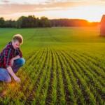 Uppkomst - Jordbruksfotograf, Svärtan/Grebban, Hjo - Väderstad-Verken - Agriculture & farming photographer (11)