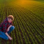 Uppkomst - Jordbruksfotograf, Svärtan/Grebban, Hjo - Väderstad-Verken - Agriculture & farming photographer (12)