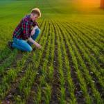 Uppkomst - Jordbruksfotograf, Svärtan/Grebban, Hjo - Väderstad-Verken - Agriculture & farming photographer (13)