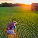 Uppkomst - Jordbruksfotograf, Svärtan/Grebban, Hjo - Väderstad-Verken - Agriculture & farming photographer (14)