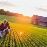 Uppkomst - Jordbruksfotograf, Svärtan/Grebban, Hjo - Väderstad-Verken - Agriculture & farming photographer (15)