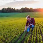 Uppkomst - Jordbruksfotograf, Svärtan/Grebban, Hjo - Väderstad-Verken - Agriculture & farming photographer (16)