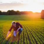 Uppkomst - Jordbruksfotograf, Svärtan/Grebban, Hjo - Väderstad-Verken - Agriculture & farming photographer (17)