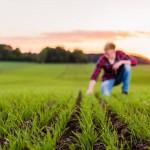 Uppkomst - Jordbruksfotograf, Svärtan/Grebban, Hjo - Väderstad-Verken - Agriculture & farming photographer (2)