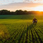 Uppkomst - Jordbruksfotograf, Svärtan/Grebban, Hjo - Väderstad-Verken - Agriculture & farming photographer (20)