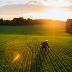 Uppkomst - Jordbruksfotograf, Svärtan/Grebban, Hjo - Väderstad-Verken - Agriculture & farming photographer (21)