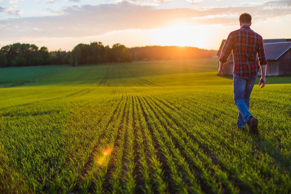 Uppkomst - Jordbruksfotograf, Svärtan/Grebban, Hjo - Väderstad-Verken - Agriculture & farming photographer (24)