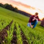 Uppkomst - Jordbruksfotograf, Svärtan/Grebban, Hjo - Väderstad-Verken - Agriculture & farming photographer (4)