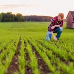Uppkomst - Jordbruksfotograf, Svärtan/Grebban, Hjo - Väderstad-Verken - Agriculture & farming photographer (5)