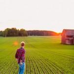 Uppkomst - Jordbruksfotograf, Svärtan/Grebban, Hjo - Väderstad-Verken - Agriculture & farming photographer (8)