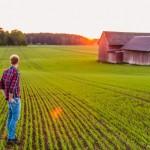 Uppkomst - Jordbruksfotograf, Svärtan/Grebban, Hjo - Väderstad-Verken - Agriculture & farming photographer (9)