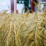 farming photographer - agriculture photographer - lantbruksfotograf - jordbrukfotograf - tornum fodertorkar, spannmålsanläggningar, grain industry