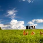 farming photography, agriculture photography, lantbruksfotografering, jordbrukfotografering, moster susannes ekoägg, äggproduktion, egg, egg production, organic, ekologisk, chicken, hen, höna, kyckling