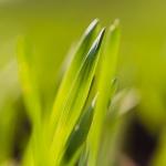 farming photography, agriculture photography, lantbruksfotografering, jordbrukfotografering, agriculture, farming, jordbruk, lantbruk, crops, skörd, uppkomst, gröda, grödor