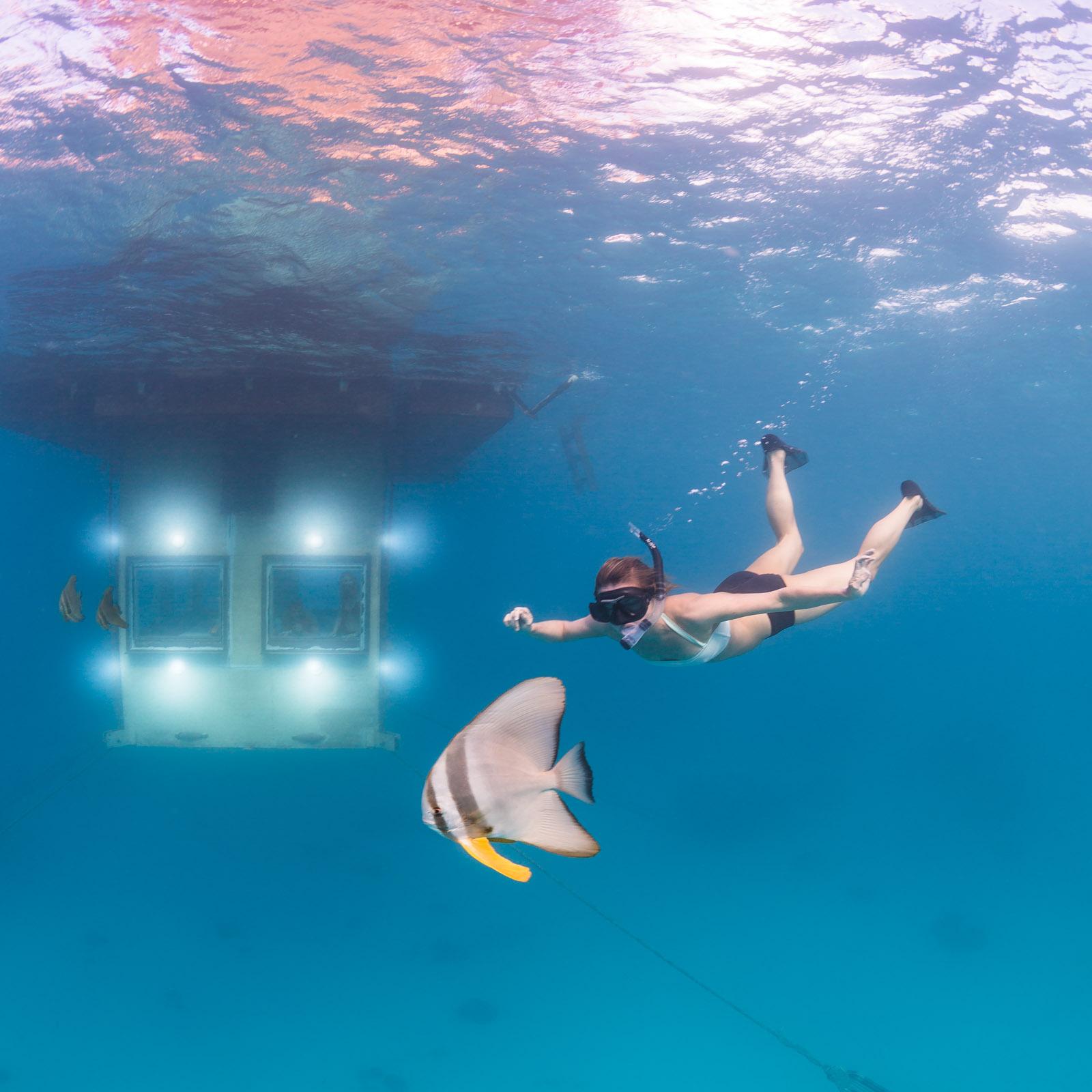 Underwater photographer - Undervattensfotograf - Manta Underwater Room - Hotel - Resort - Pemba Island, Zanzibar, Tanzania, Africa, Afrika - Orbicular batfish
