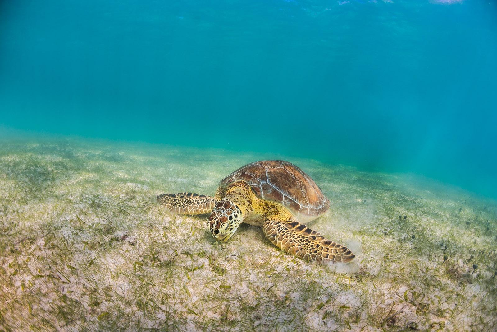 Underwater Photo Photographer Anhede Kickass Photos