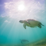 Underwater photographer - Undervattensfotograf - Sea turtle - Tortuga - Havssköldpadda - Mexico, Tulum, Akumal, Mexiko