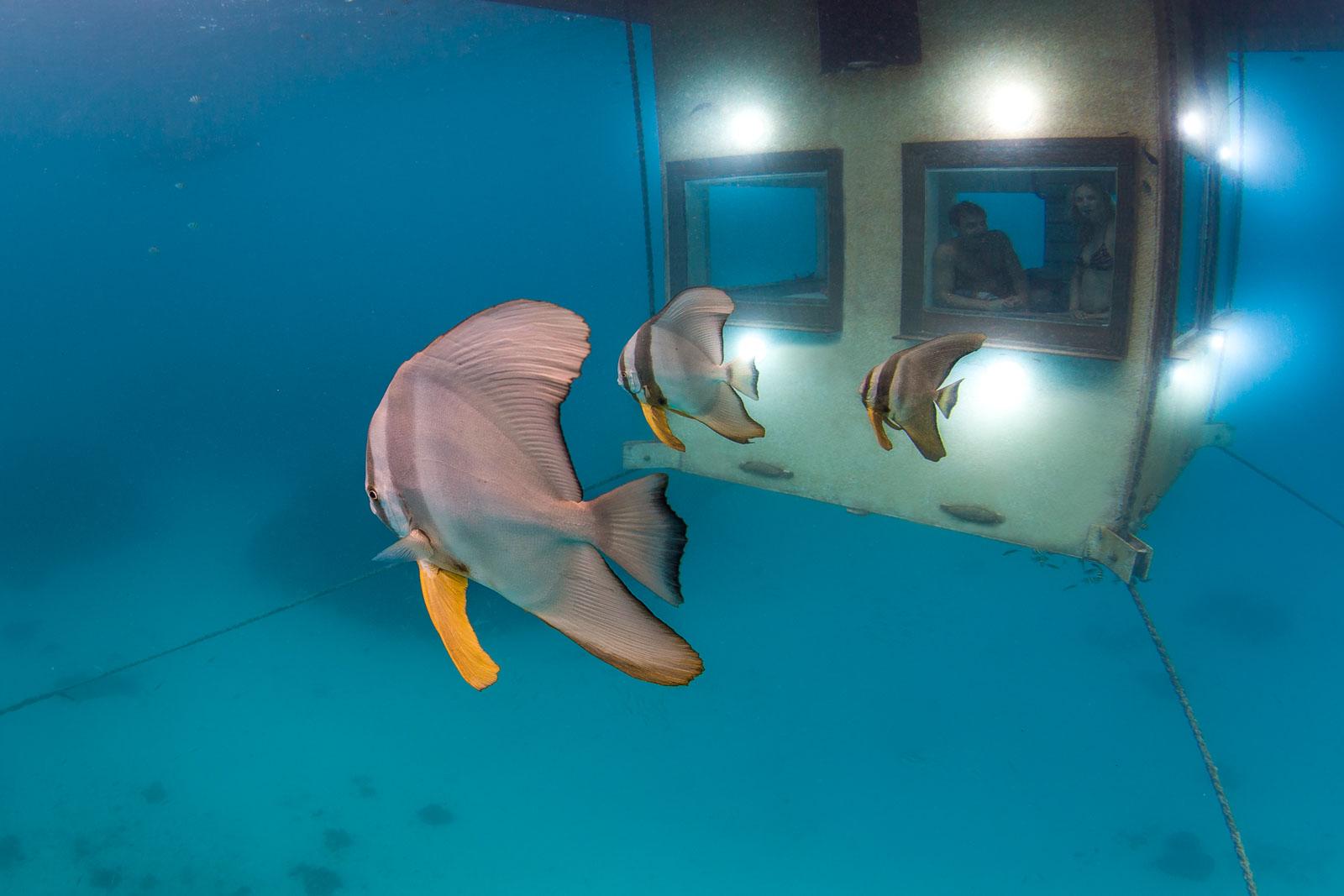 3-underwater-batfish-manta-resort-underwater-room-money-shots