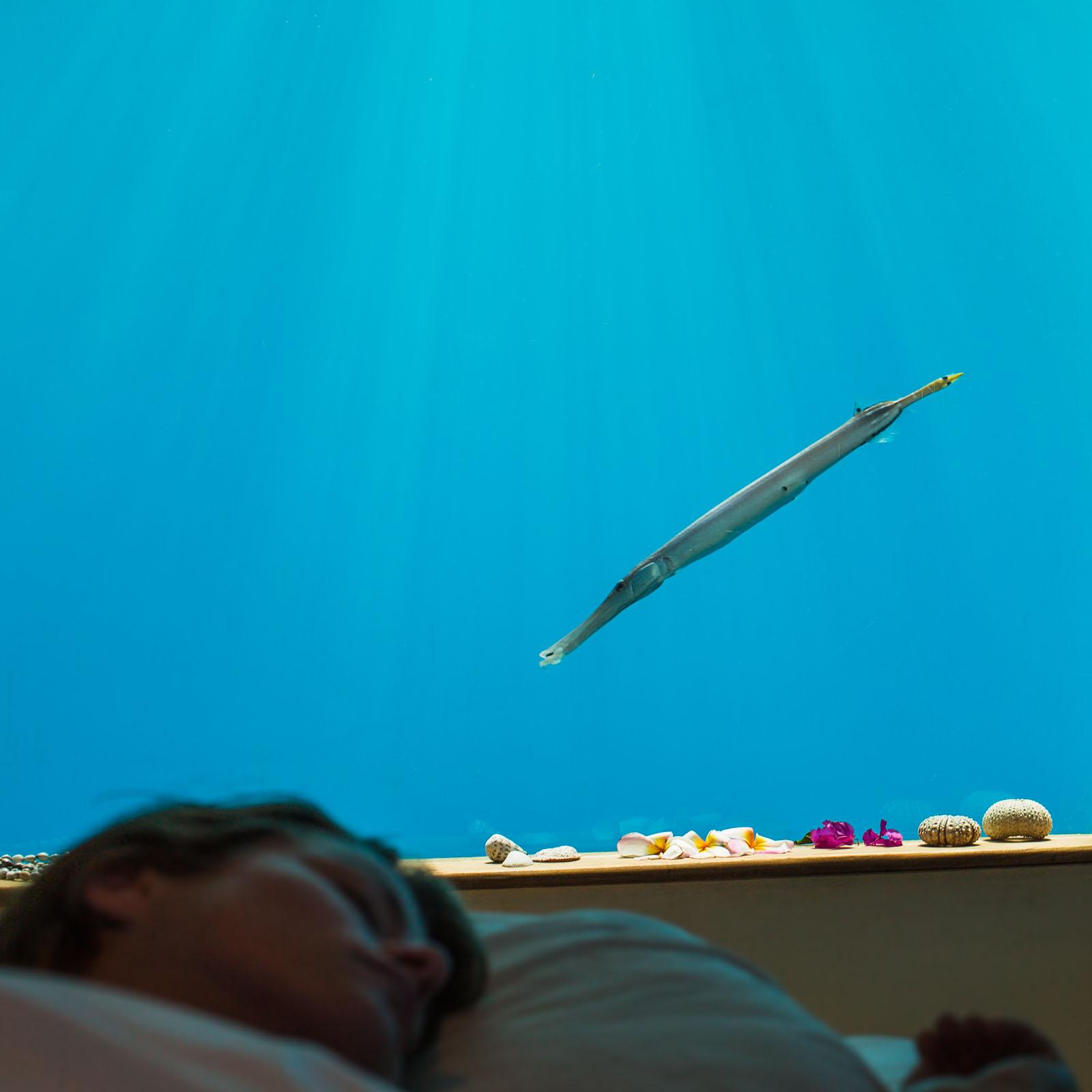 4-sleeping-with-the-fish-manta-resort-underwater-room-money-shots