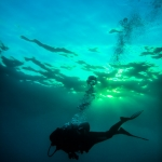 Underwater photo - Silhouette of a sport diver