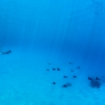 Underwater photography - Seychelles