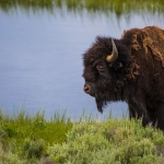 wildlife-j-bar-l-ranch-montana-usa-02