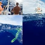 Behind the scenes - mahi mahi, fishing, trolling, pacific, ocean, sailing, wanderlust, anhede, guldmakrill, dorade coryphène, lampuga, llampuga, lampuka, lampuki, rakingo, calitos, maverikos