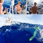 Behind the scenes mahi mahi, fishing, trolling, pacific, ocean, sailing, wanderlust, anhede, guldmakrill, dorade coryphène, lampuga, llampuga, lampuka, lampuki, rakingo, calitos, maverikos