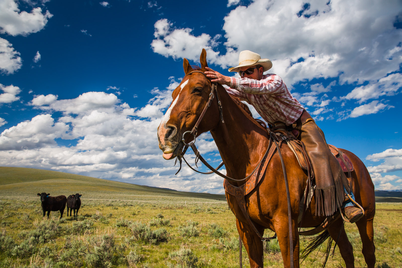 montana, usa, travel, wanderlust, horses, centennial, valley, yellowstone, jbarl, ranch, cowboy, photojournalism, bigskycountry, outwest, inmontana, montanamoment, onassignment, animals, cute, funny face