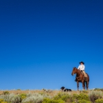range rider, cowboy, conservationist, montana, cattle, livestock, ranch, usa, horses, centennial valley, yellowstone