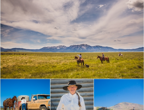 This is Marci – Range Rider in the Centennial Valley, Montana, USA