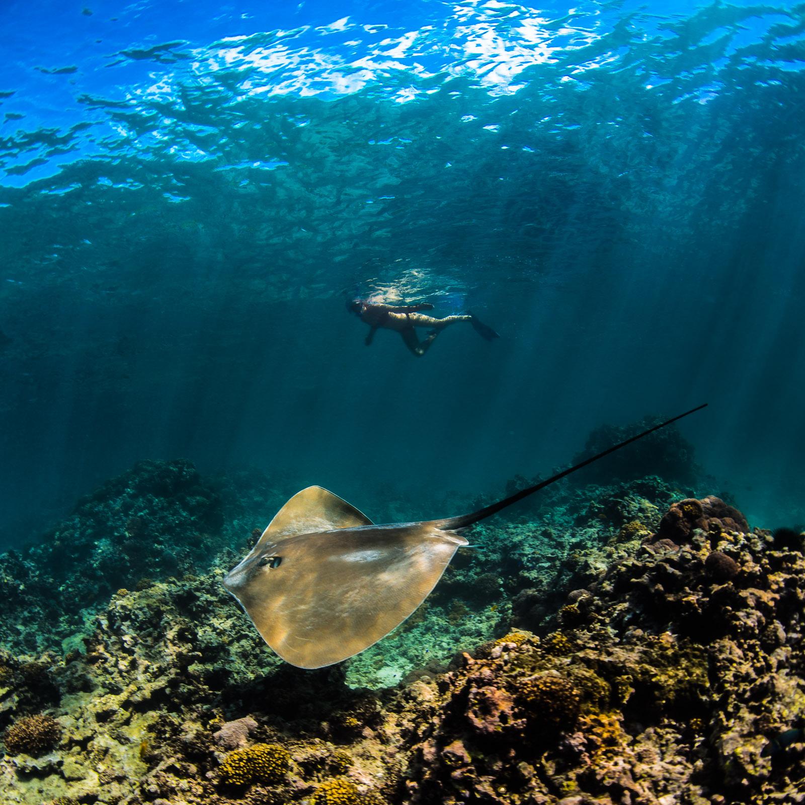 stingray, seychelles, la digue, underwater, snorkeling, diving, travel, adventure, wanderlust, underwater photo, underwater photographer, photographer, seychellerna, undervattensfoto, undervattensfotograf, fotograf, rocka, anhede