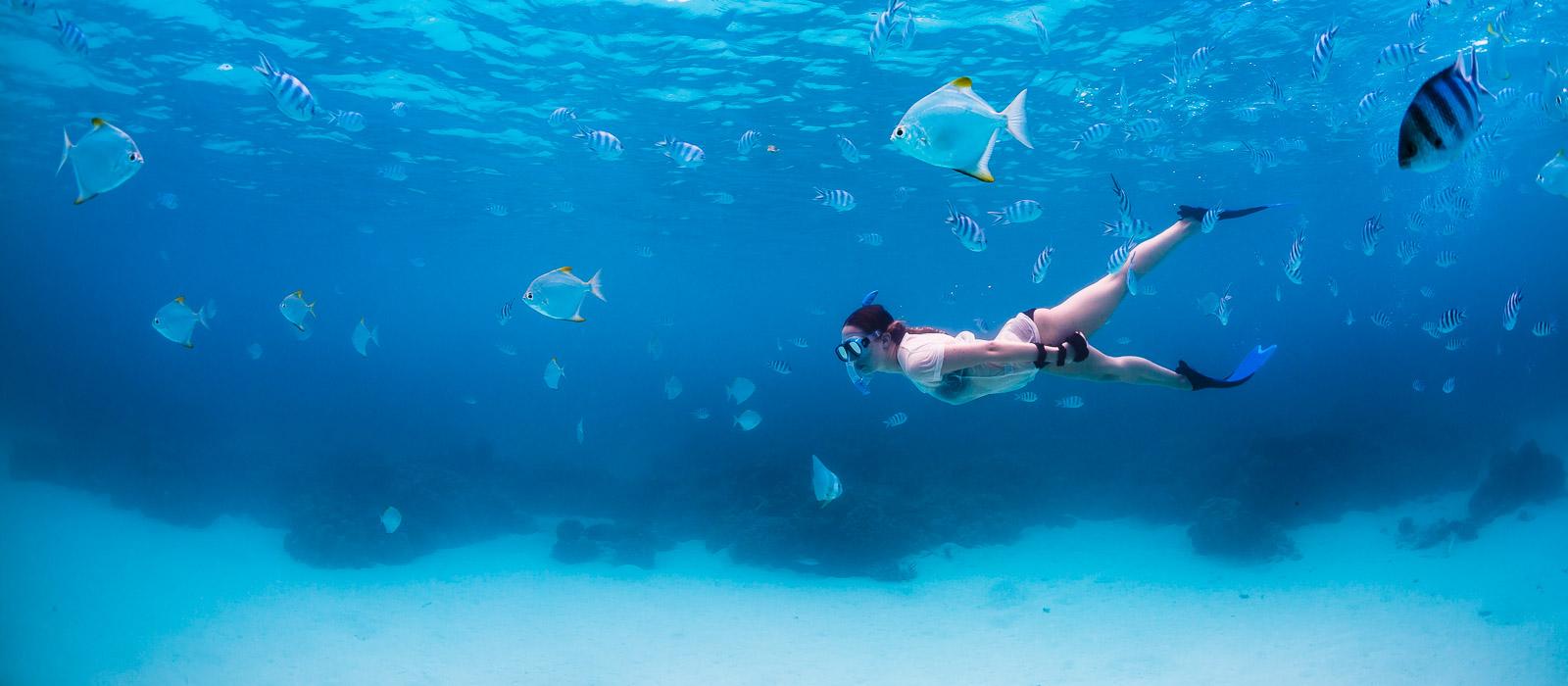 underwater photographer, undervattensfotograf, snorkeling, diving, seychelles, seychellerna, fish, fisk