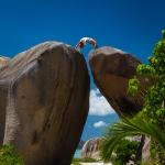 Suicidal yoga, La Digue island, Seychelles