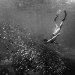 black and white, snorkeling, seychelles