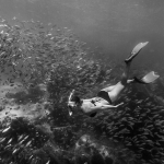 snorkeling, black and white, school of fish