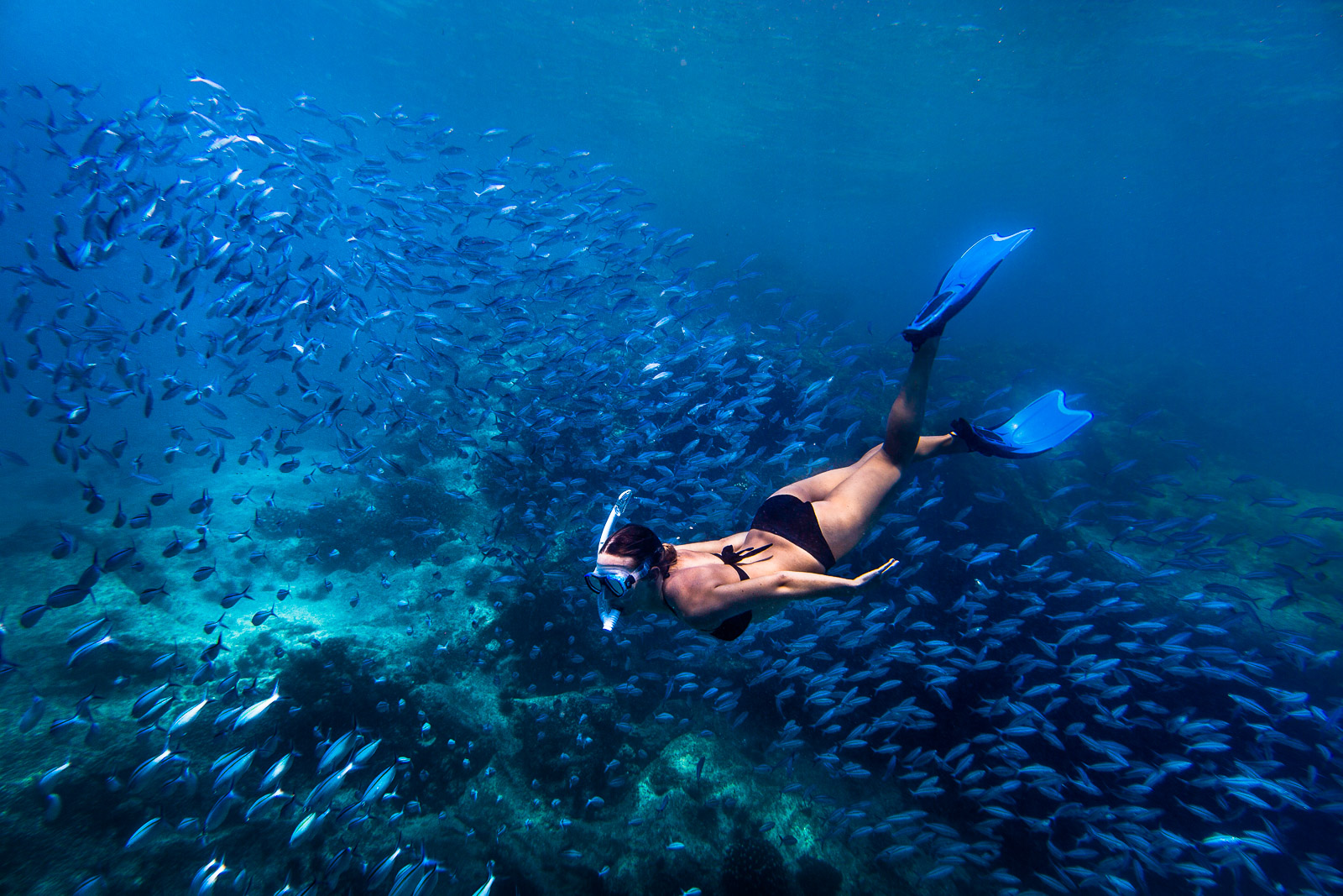 Snorkeling in a school of fish outside Sunset beach on Mahe island in the Seychelles
