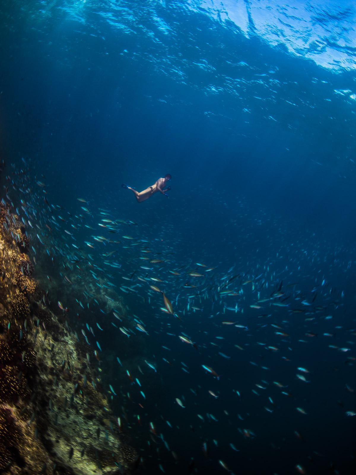 freediving, indianocean, island, lilot, ocean, seychellerna, seychelles, snorkeling, travel, undervattensfotograf, underwater, underwater photographer, wanderlust