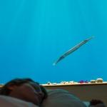 interior-photographer-underwater-room-hotel-zanzibar-tanzania