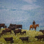 Yellowstone Grassfed Beef official photographer