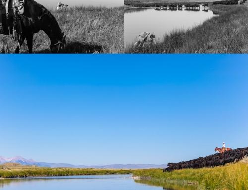 Fototips – Komponera bilden så det viktigaste syns tydligast